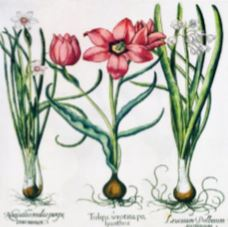 Craft Collection - botanical - Minton Hollins